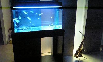 熱帯魚とサックス